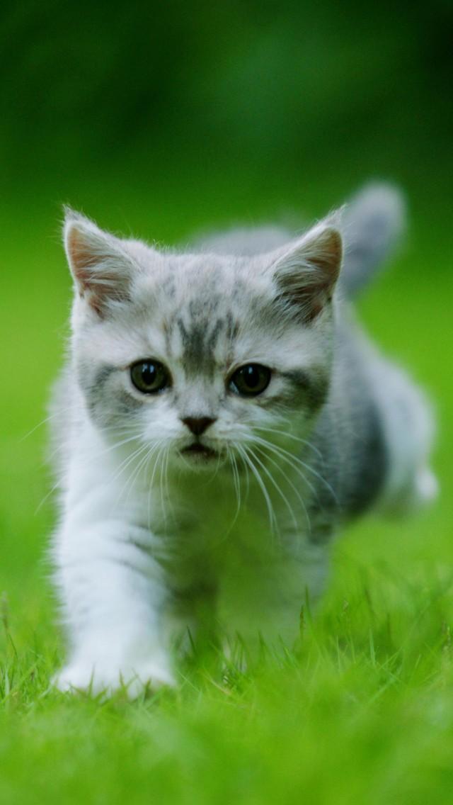 壁纸 动物 猫 猫咪 小猫 桌面 640_1136 竖版 竖屏 手机