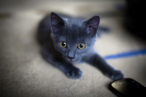 手机壁纸 动物壁纸 大眼黑猫