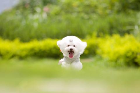 手机壁纸 动物壁纸 奔跑的小狗