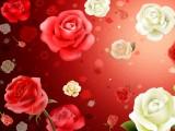 玫瑰满天飞